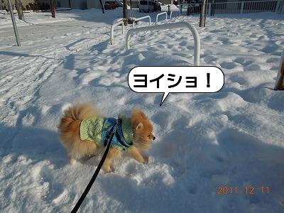 20111211_006.jpg