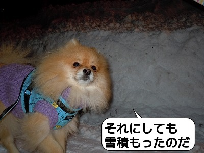 20111230_004.jpg