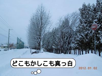 20120102_002.jpg