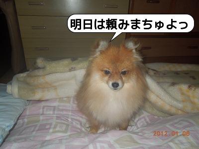 20120106_005.jpg