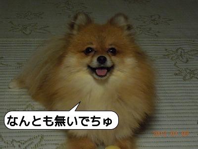20120109_004.jpg