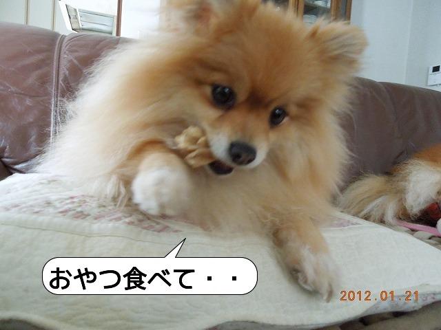 20120121_002.jpg