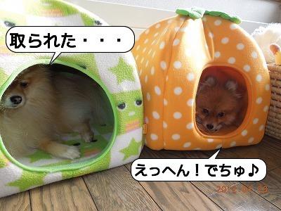 20120123_001.jpg
