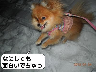 20120124_004.jpg
