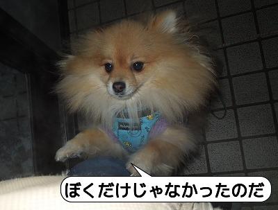 20120126_001.jpg