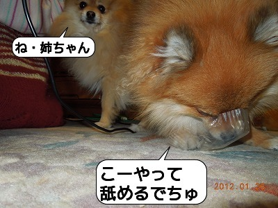 20120126_003.jpg