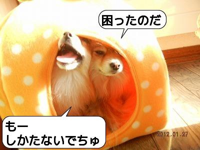 20120127_001.jpg