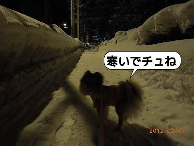 20120201_001.jpg