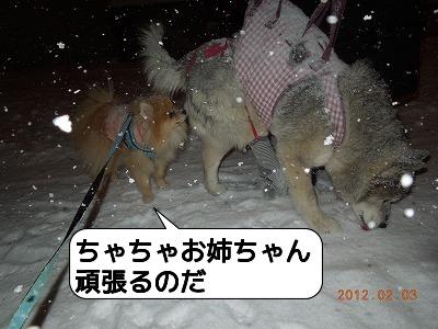 20120203_004.jpg