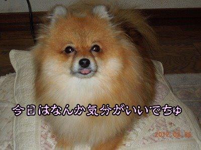20120226_006.jpg