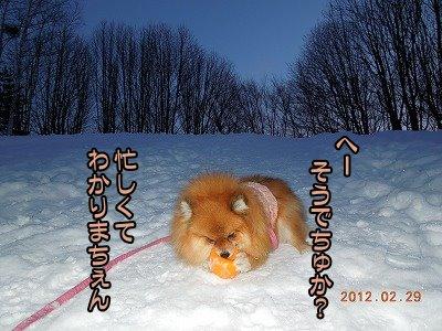 20120229_003.jpg