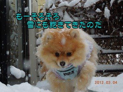 20120304_005.jpg