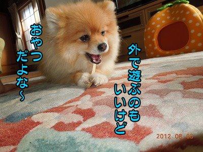 20120304_009.jpg