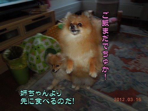 20120316_001.jpg