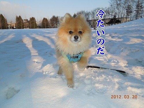 20120322_001.jpg