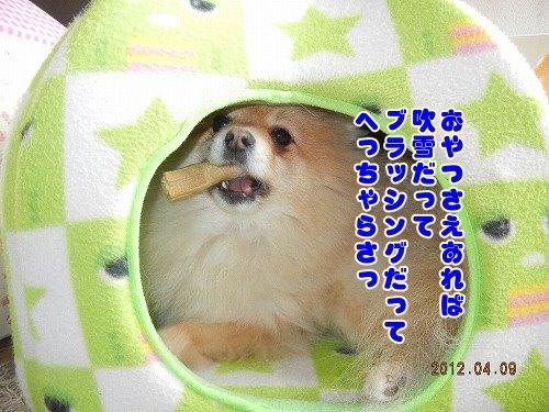 20120409_003.jpg