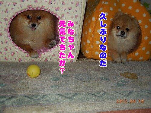 20120419_01.jpg