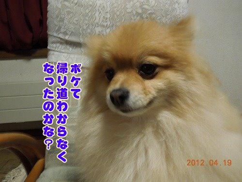 20120419_03.jpg