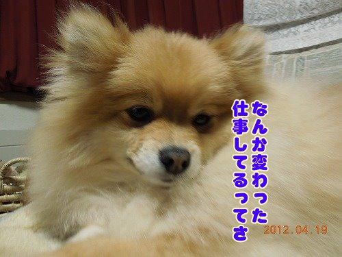 20120419_04.jpg