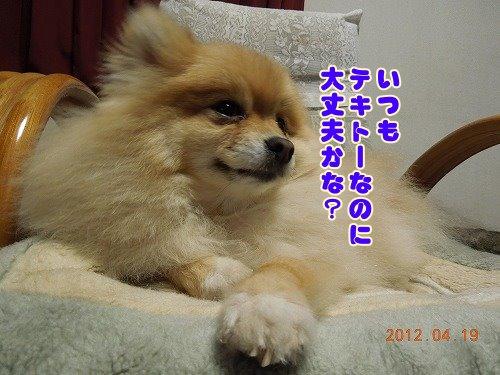 20120419_05.jpg