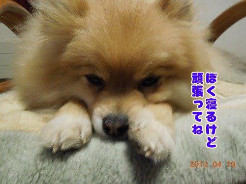 20120419_07.jpg