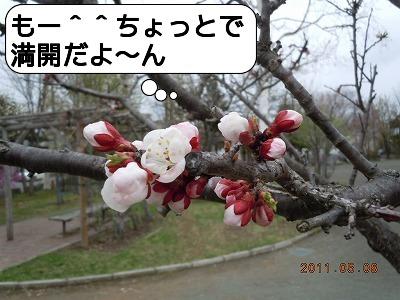 2DSCN2162.jpg
