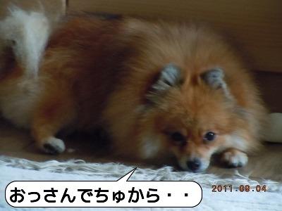 5DSCN3510.jpg