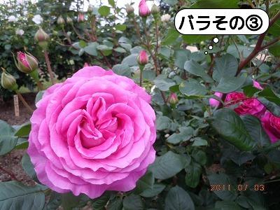 DSCN3822.jpg