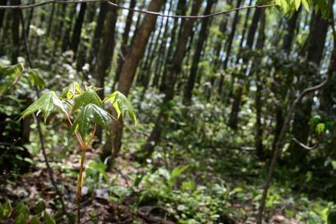 とある森の中