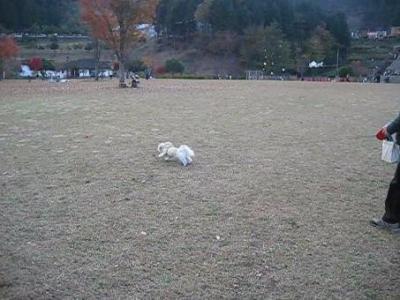 ssmiyagase1.jpg