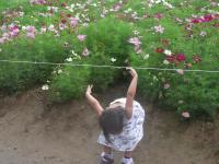 踊る沙代子3