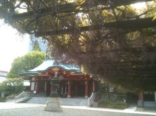 日枝神社 藤と拝殿