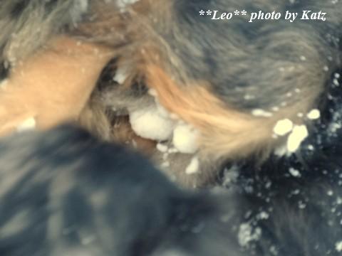 20131229 Leo (2)