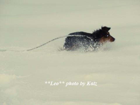 20131229 Leo (8)