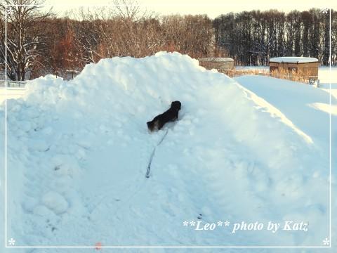 20140105 Leo (4)