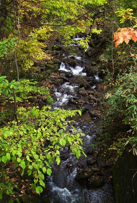 冬を待つ小渓流