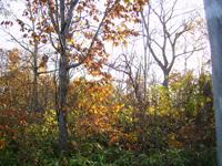 森にそそぐまま