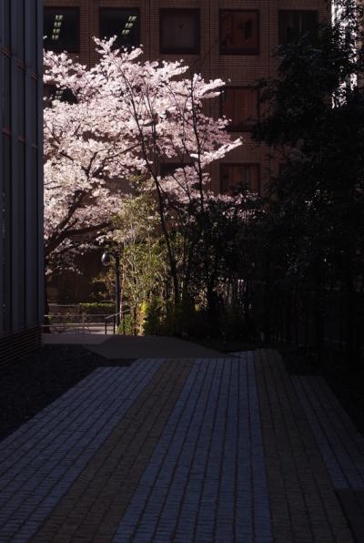 2012桜2_convert_20120414173705