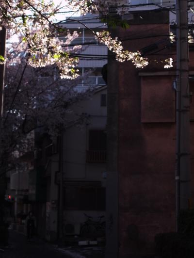 2012桜1_convert_20120414173633