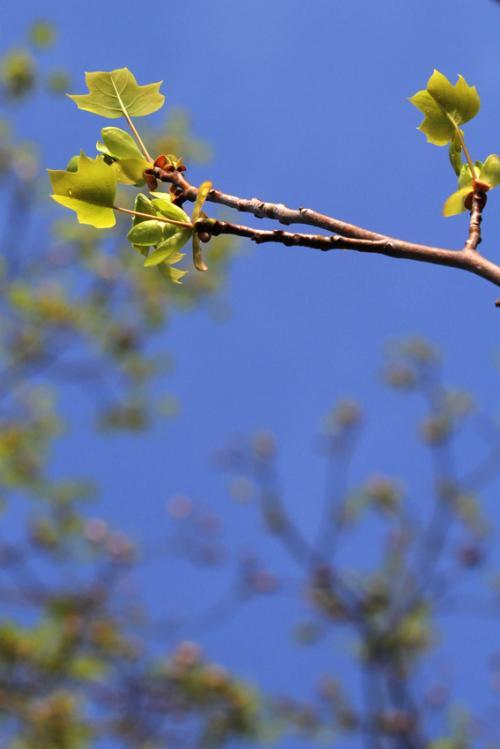 黄緑の季節1_convert_20120416215451