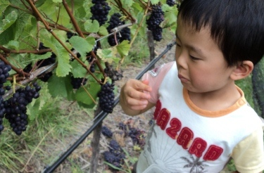 Ryo grape tasting 2