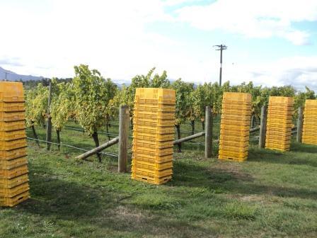 harvest bin web