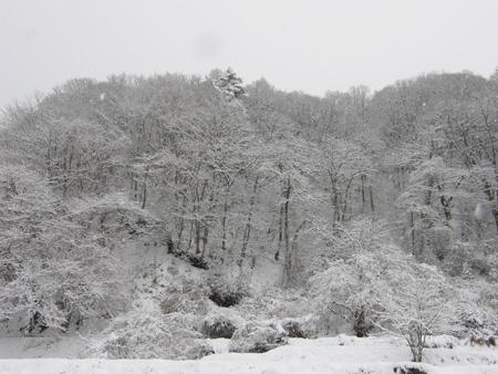 2012-1-20-2.jpg