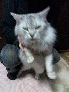 cat110205