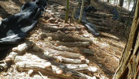 2012-4-24椎茸