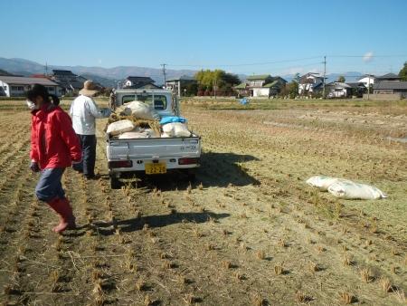 稲の脱穀 (2)
