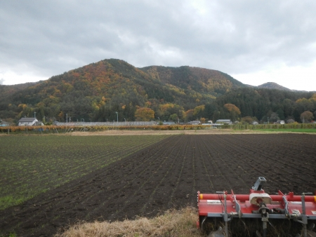 大豆後の耕起作業 (1)