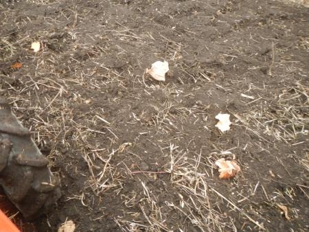 大豆後の耕起作業 (4)