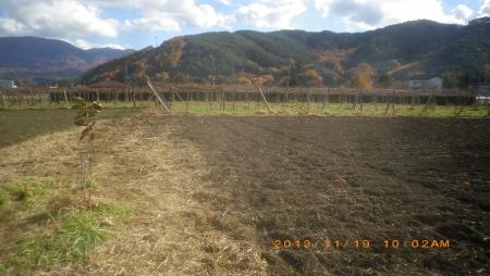 麦畑 (2)