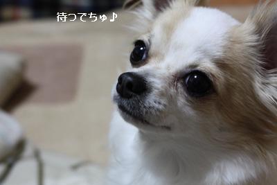 IMG_6881・2 コピー